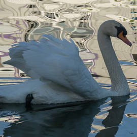 Bruce Frye - Shaded Swan with Reflections