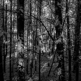 Donna Fonseca Newton - Shadow Ghosts