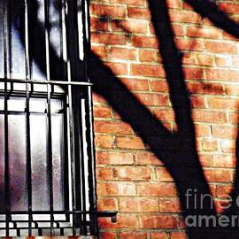 Shadow on the Wall by Sarah Loft