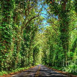 Shadows and Light The Tree Tunnel South Shore Kauai Hawaii Art by Reid Callaway