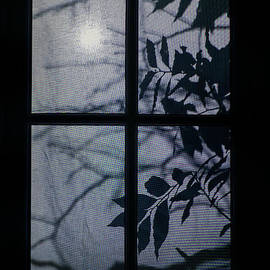 Shadows behind the window by Patricia Hofmeester