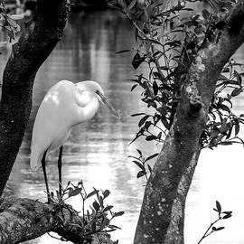 Shady Rest BW by Norman Johnson