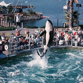 Shamu the Orca Sea World San Diego 1967 by California Views Archives Mr Pat Hathaway Archives