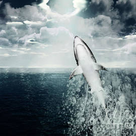Shark Watch by Digital Art Cafe