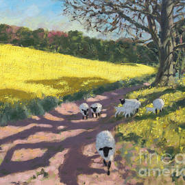 Sheep and yellow field - Andrew Macara