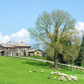 Sheep Grazing Old Cottage Background by Luca Lorenzelli