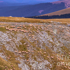Claudia M Photography - Sheep grazing on the mountain side