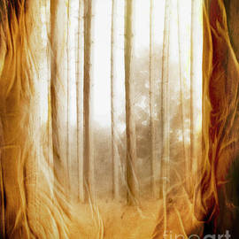 Sheer Forest by Hal Halli
