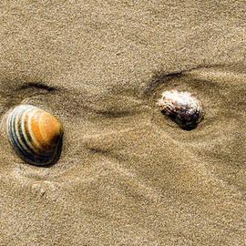 Steven Ralser - Shells on Beach