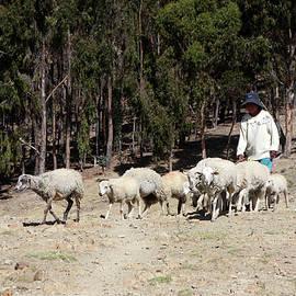 Aidan Moran - The Shepherd Boy