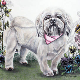 Shih Tzu in Color