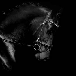 Shiny Black Horse