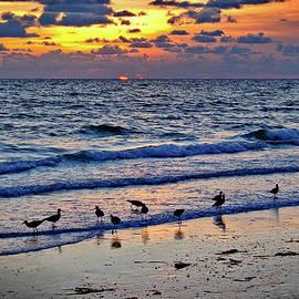 Craig Andrews - Shore Birds