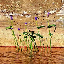 Debbie Oppermann - Showcasing Pickerel Weed