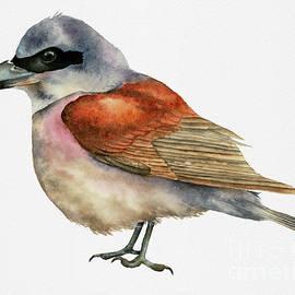 NamiBear - Shrike Bird Watercolor Painting