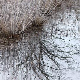 Shurbs In Winter Marsh by Captain Debbie Ritter