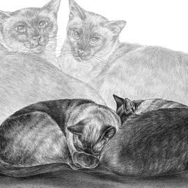 Siamese Cat Siesta by Kelli Swan