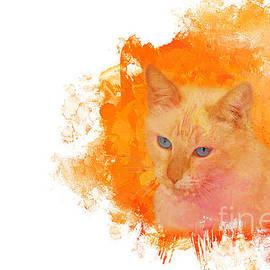 Elisabeth Lucas - Siamese Cat Splash