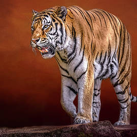 Siberian Tiger by Wes Iversen
