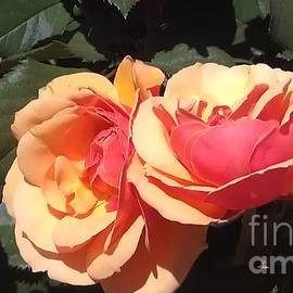 Lynn Michelle - Side View - Rose