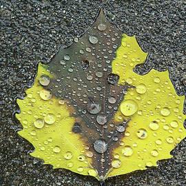 Sidewalk Leaf by Jerry Griffin