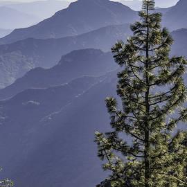 Steven Sparks - Sierra Nevada Foothills
