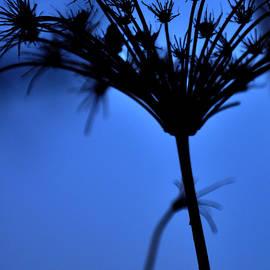 Damijana Cermelj - Silhouette blue