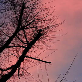 Silhouette Sunset by Kathy Barney