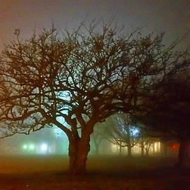 Michael Rucker - Silhouette Tree