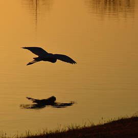 Silhouette with reflection in the lake by Brigitta Diaz
