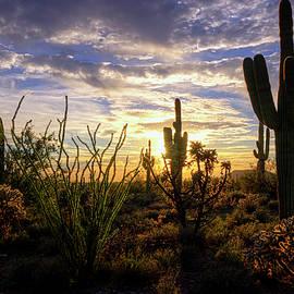 Saija Lehtonen - Silhouettes of The Sonoran
