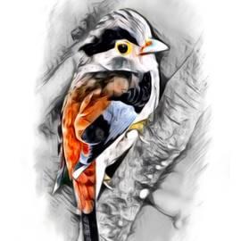 Scott Wallace - Silver Breasted Broadbill Color Sketch
