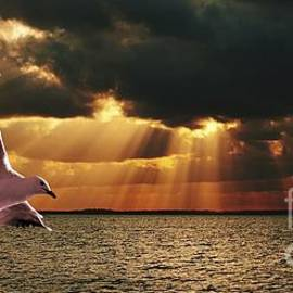 Geoff Childs - Silver Gull and God Clouds - Sunset at Sea.Original east Australian photo art.