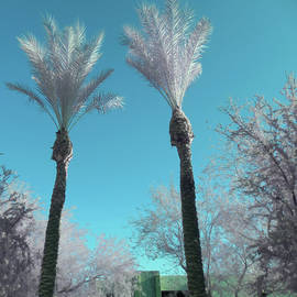Silver Palms 1 by Paulette B Wright