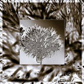 Mona Stut - Silver Thistle