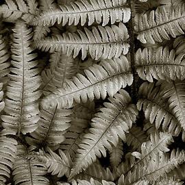 Silvery Ferns by Dave Gordon