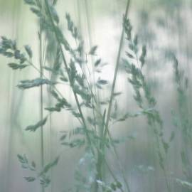 Silvery Green Grasses by Barbara St Jean