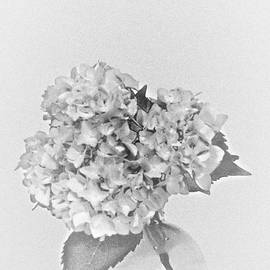 Sherry Hallemeier - Simplistic Living in Black and White