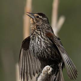 Sing, Sing, Sing A Song by Rhonda Robinson