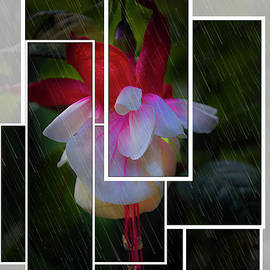 Al Bourassa - Singing In The Rain