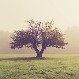 Edward Fielding - Single apple tree in an orchard