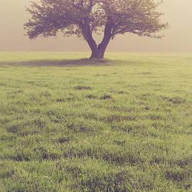 Single Apple Tree in the Fog - Edward Fielding
