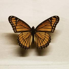 Martin Newman - Single Butterfly