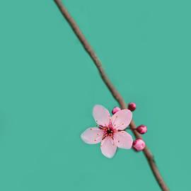 Rebecca Cozart - Single Cherry Blossom