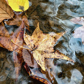Single in the Fall by Juanita McCoy