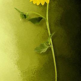 Single Long Stem Sunflower by Debi Dalio