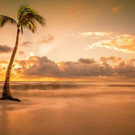 Yves Gagnon - Single Palm Tree