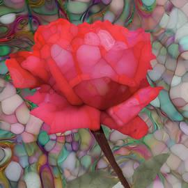 Jack Zulli - Single Rose