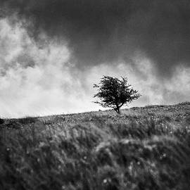 Single Tree on Dartmoor by David Hare