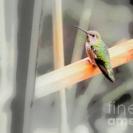Sitting Hummer by Michele Hancock